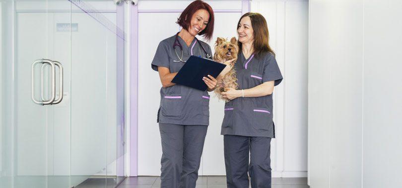 veterinary-receptionist