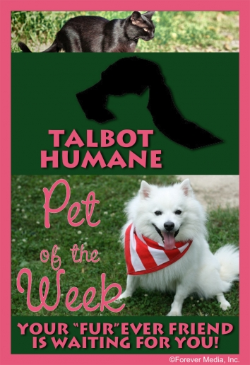 Talbot Humane Pet of the Week