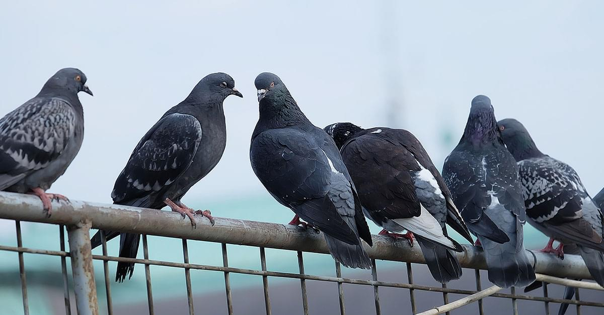 Watch: Lawmaker Gets Pooped on by Pigeon During Interview about Pigeon Poop