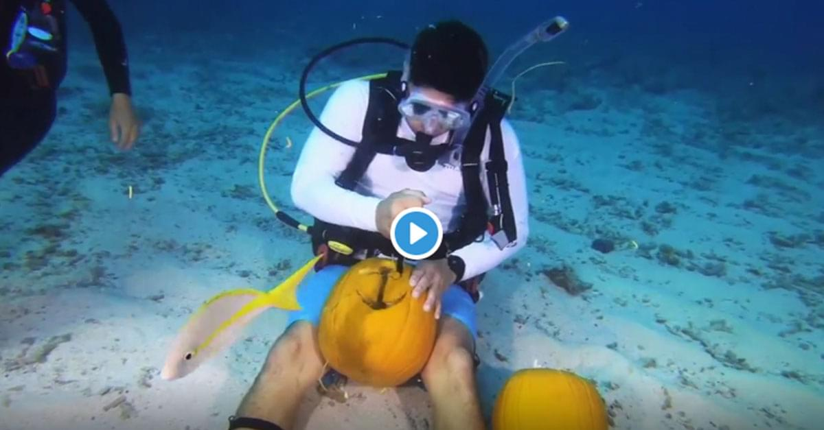 Watch: Scuba Divers Compete in Underwater Pumpkin-Carving Challenge