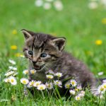 Good News For Cat Lovers…You Aren't Crazy