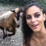 Taking A Selfie With A Goat Is A Really Bad Idea [VIDEO]