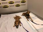 WATCH: Puppies In The Studio