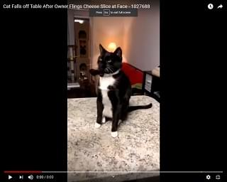 Viral Video of the Day: Cat Falls off Table After Owner Flings Cheese Slice at Face