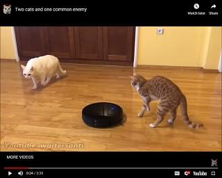 Viral Video of the Day: Two Cats, One Enemy