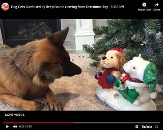 Viral Video: Dog Confused By Sound Coming From Old Christmas Toy