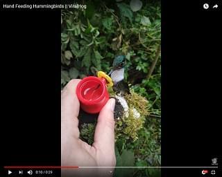 Viral Video: Hand Feeding Hummingbirds