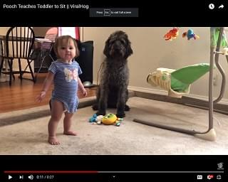 Viral Video: Pooch Teaches Toddler to Sit