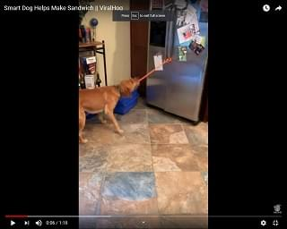 Viral Video of the Day: Smart Dog Helps His Human Make A Sandwich