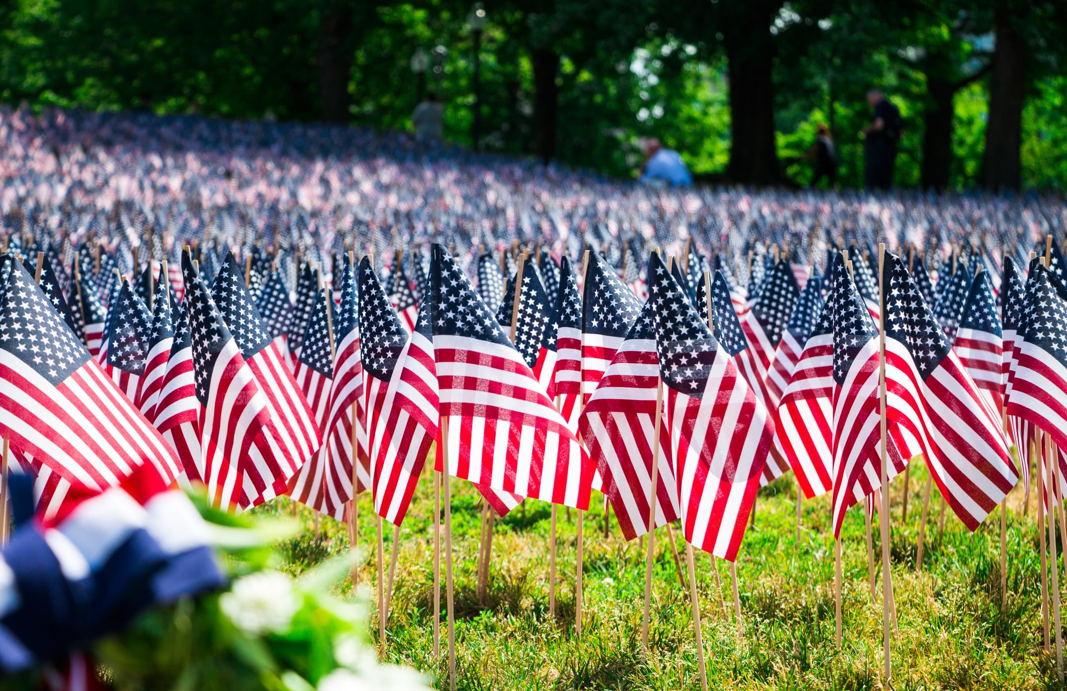 A Field Of American Flags On A Grassy Hill In Boston Common Park
