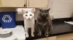 Pet of the Week: Luna and Milo