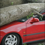 Tony & Melissa in the Morning: Should Trees Get the Ax?