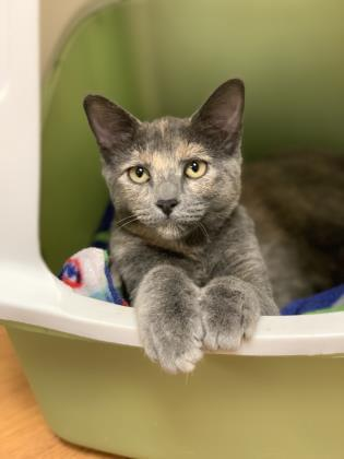 Pets of the Week 10-10-19