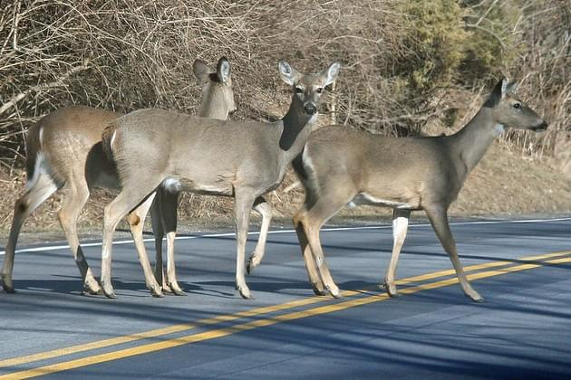 WVEL News/Travel Scope Now: Officials Are Warning Drivers To Watch Out For Deer This Fall Season