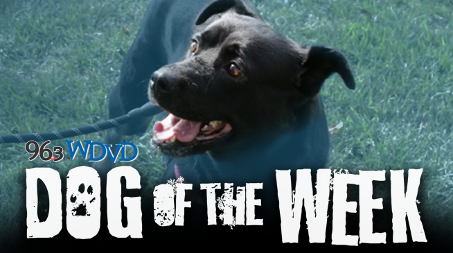 Dog of the Week with Detroit Dog Rescue!