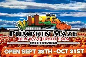 Pumpkin Maze – Dell Osso Family Farm