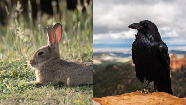 Is This A Rabbit Or A Raven? Bizarre Optical Illusion Confusing The Internet