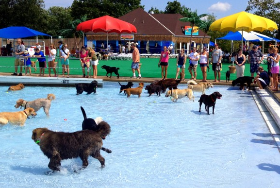 Last Weekend for Waterparks Open for Dogs