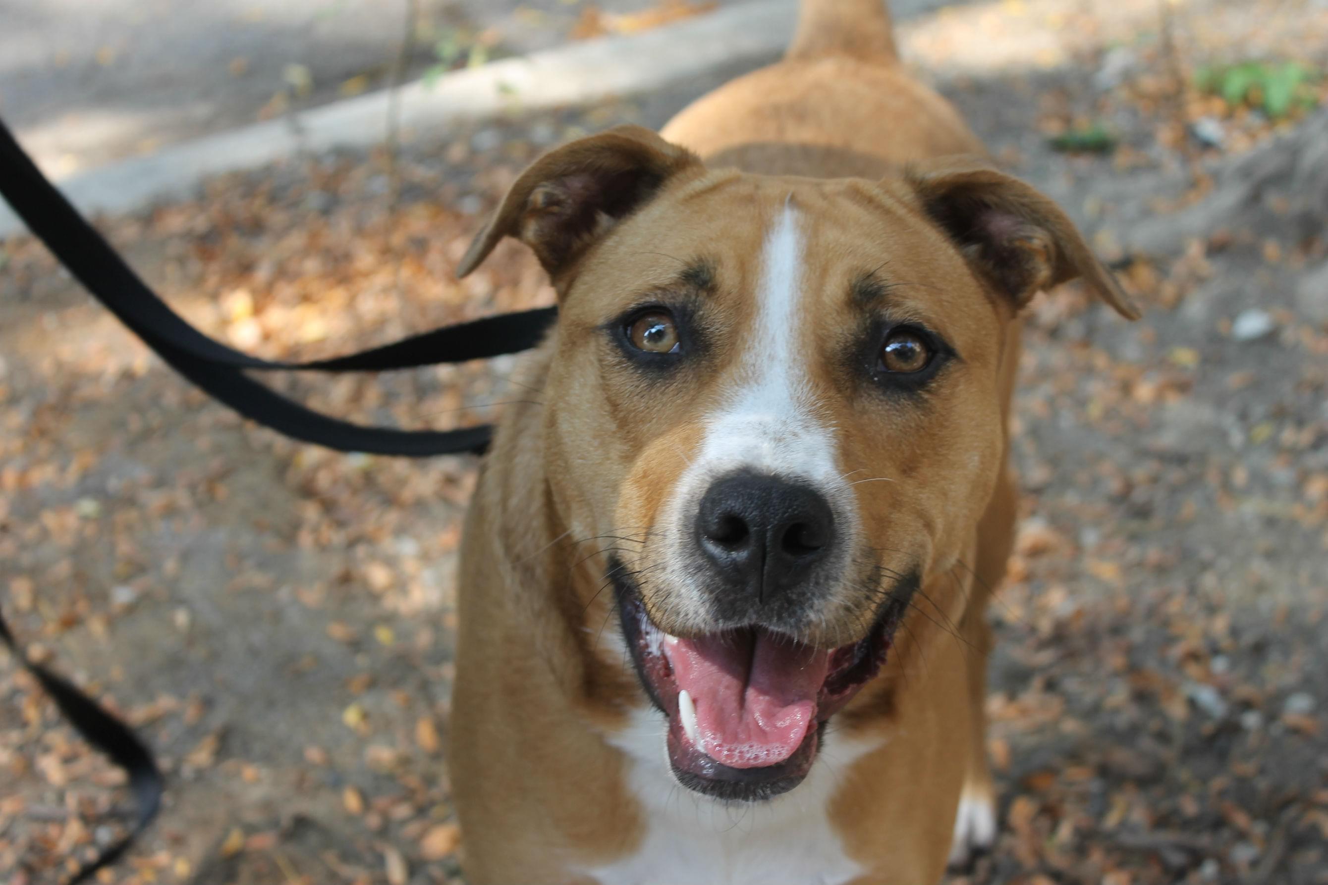 PAWS Pet of the week: Caramel!