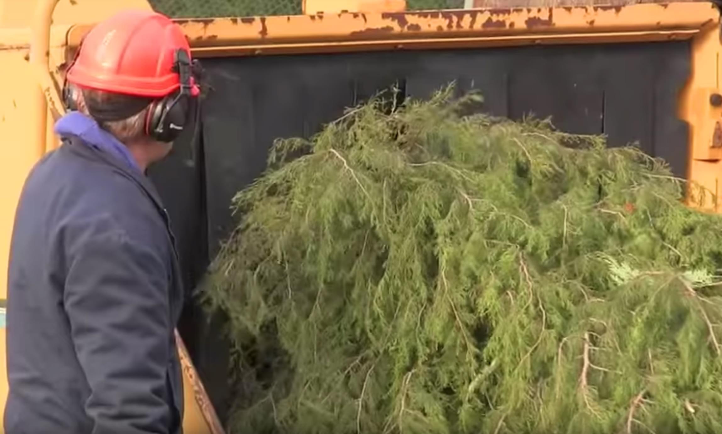 City of Chicago Christmas Tree recycling kicks off January 5th