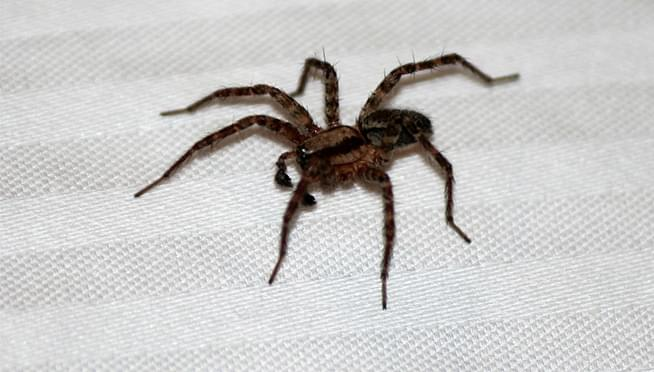 Why you're seeing more spiders in your home this year