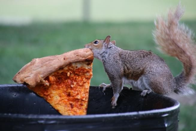 What's the best pizza in Chicago?