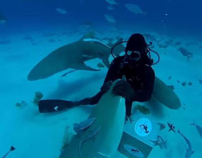 SHARK WEEK SHARK TEST: Can Sharks Smell a Drop of Blood