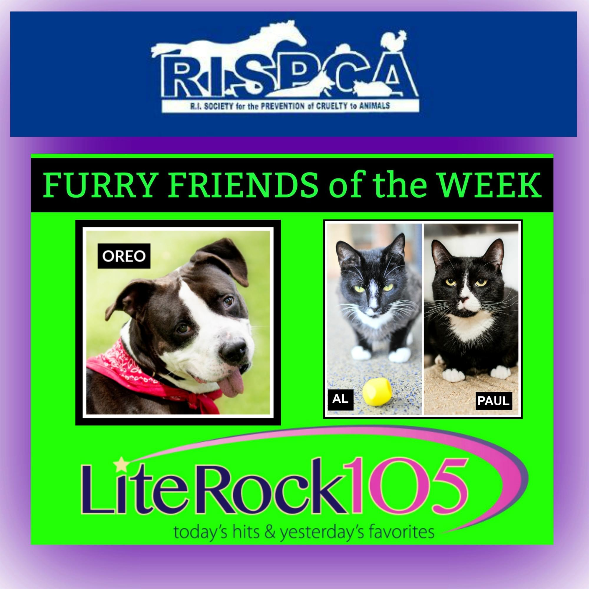 Meet Oreo, Al, and Paul! Our FURRY FRIENDS of the WEEK! (7/1/19)