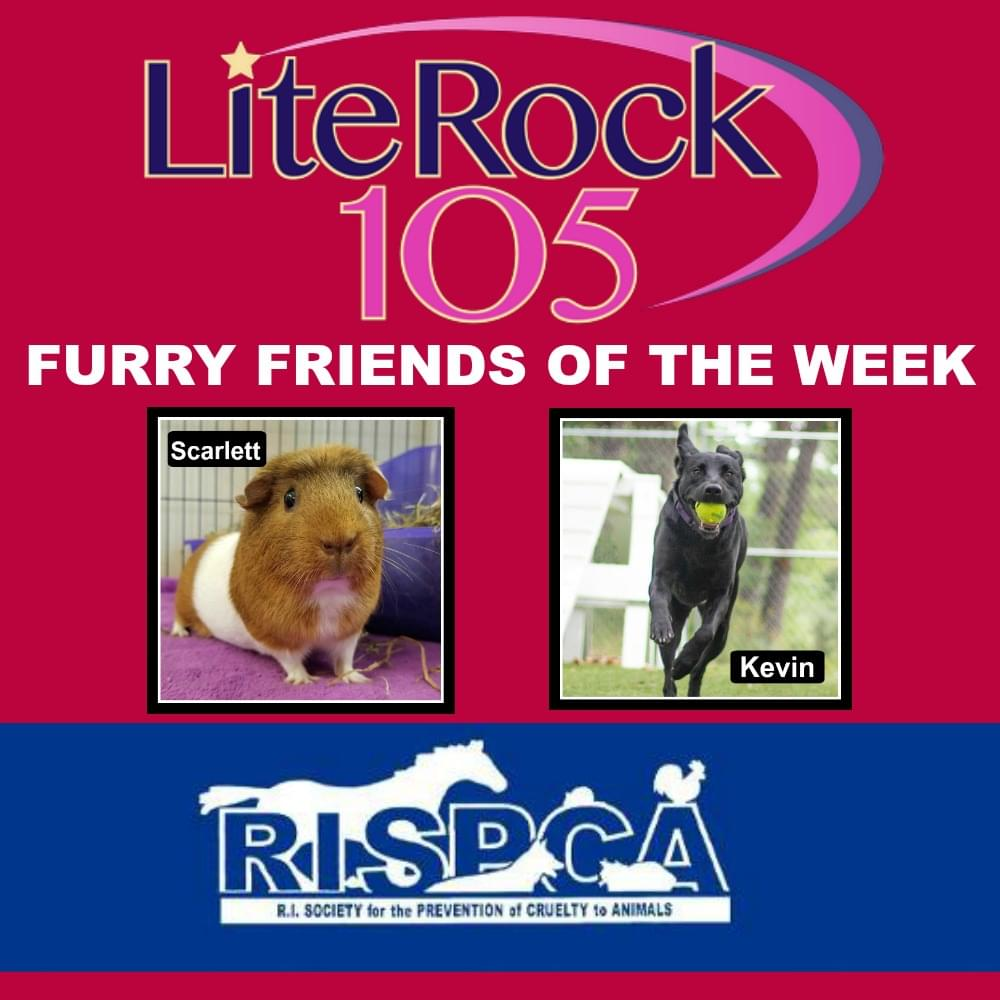 Meet Scarlett and Kevin, our FURRY FRIENDS of the WEEK!