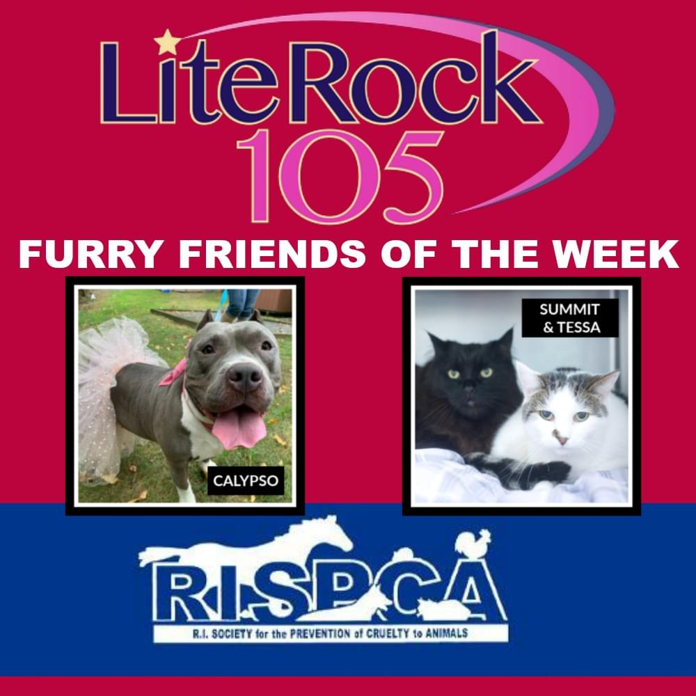Meet Calypso, Summit & Tessa! Our new FURRY FRIENDS of the WEEK! (8/26/19)