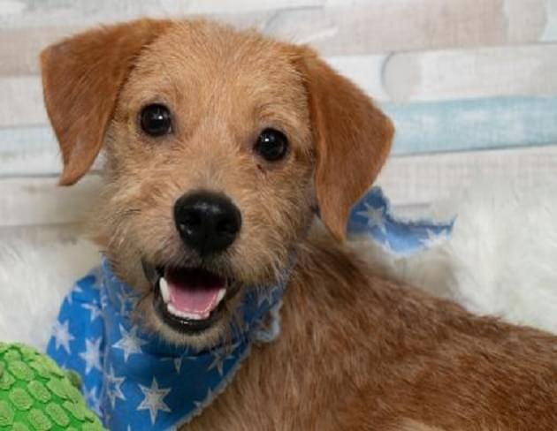 Pet of the Week: Buster the Terrier Mix Dog [PHOTOS]