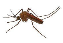 2019 Mosquito Forecast – Click Here for More Information!