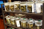 State welcomes public input on adding diseases to medical marijuana list