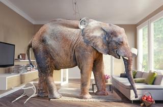 elephant_room_sm
