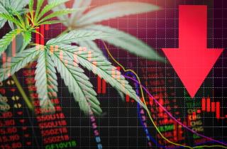 falling_cannabis_stocks_sm