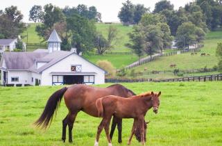 Horses on horse farm