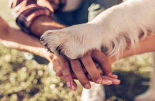 A dog's paw stacked with people's hands