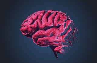 Brain with some areas missing