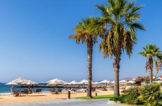 Palm trees near beach with sea