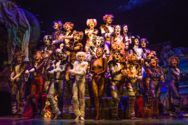 The revival company performs the opening number of Andrew Lloyd Webber's Cats, directed by Trevor Nunn, at Broadway's Neil Simon Theatre.