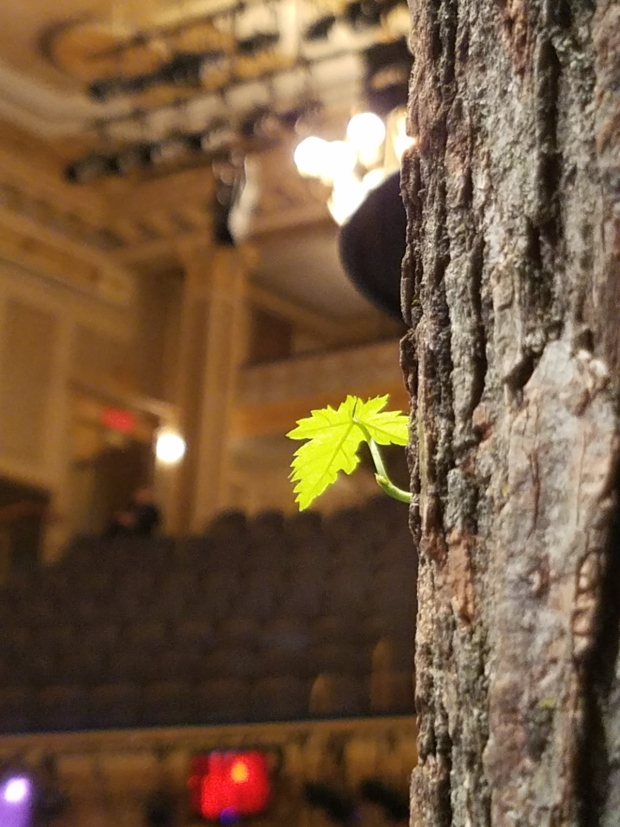 Green shoots sprout out of the set for Come From away on Broadway.