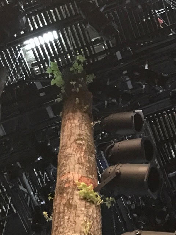 The set for Come From Away on Broadway uses real trees harvested from the Adirondacks.