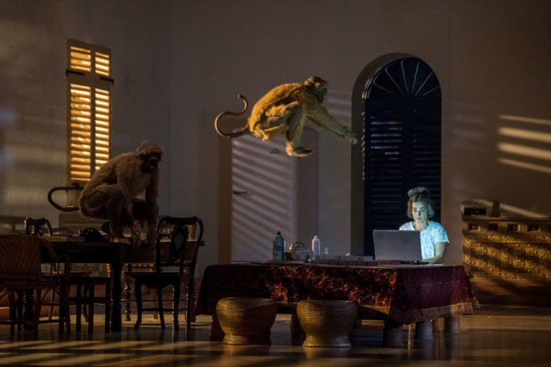Two monkeys (Seear Kohi and Arman Saribekyan) leap into the room occupied by Cornélia (Hélène Cinque) in A Room in India.