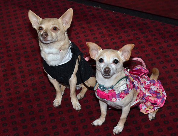 Chico and Roxie on the opening night of Lady Day at Emerson's Bar & Grill.