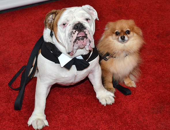 Romeo and Trixie on the Bullets Over Broadway red carpet.