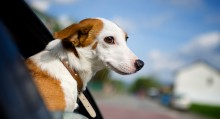 Pet Relocation Checklist