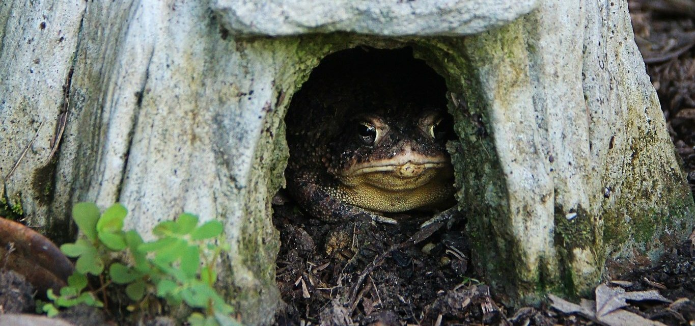 Toad in a Toad House