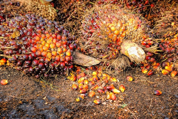 Palm oil fruit blog image