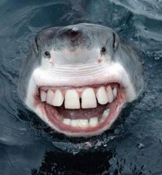 Sharks-With-Human-Teeth-011