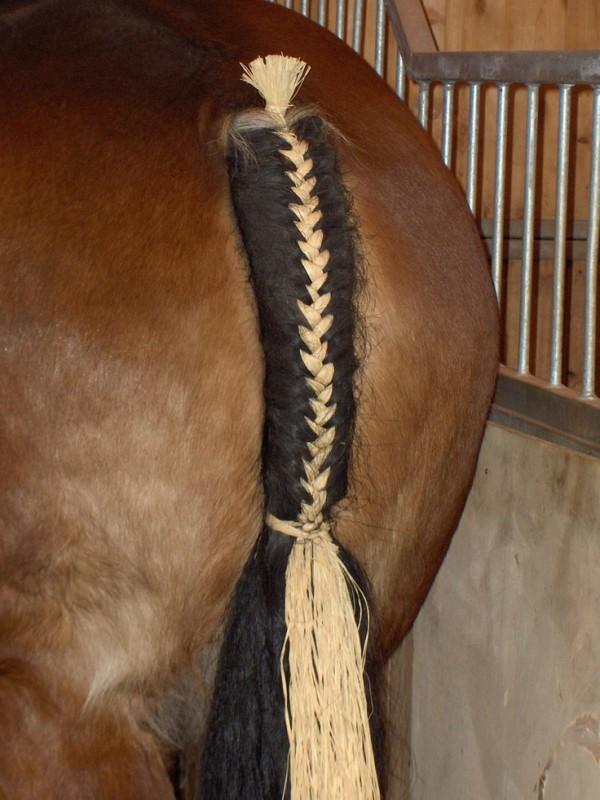 b3e57d18431d69030781d278f53e1e39--tail-braids-horse-braiding